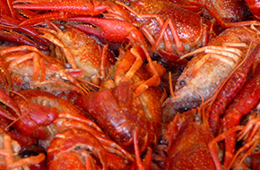Seafood Carry Out | BAHAMA'S CRABSHACK CARRYOUT & SEAFOOD MARKET | Ocean City, MD | (302) 537-5882